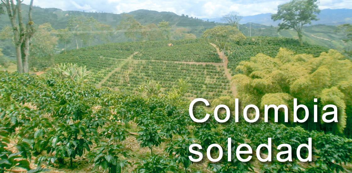 コロンビア ソレダー農園