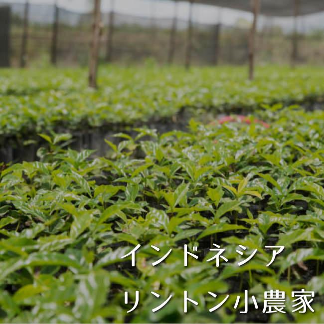 インドネシア リントン農園