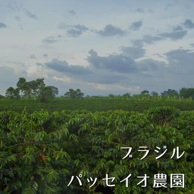 ブラジル パッセイオ農園100g
