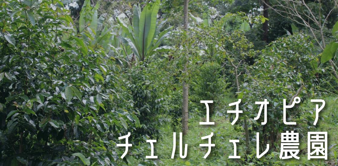 エチオピア チェルチェレ農園