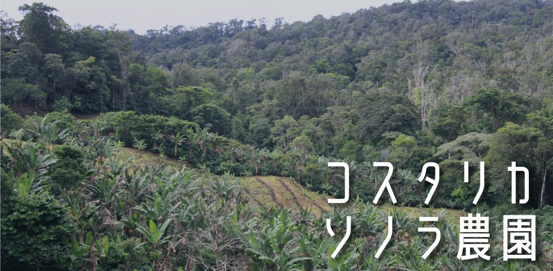 コスタリカ ソノラ農園