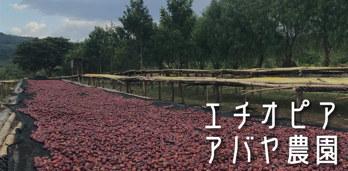 エチオピア アバヤ農園